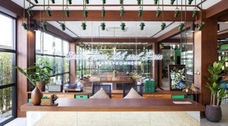 泰国草药制造商的办公室设计:绿色和植物主题